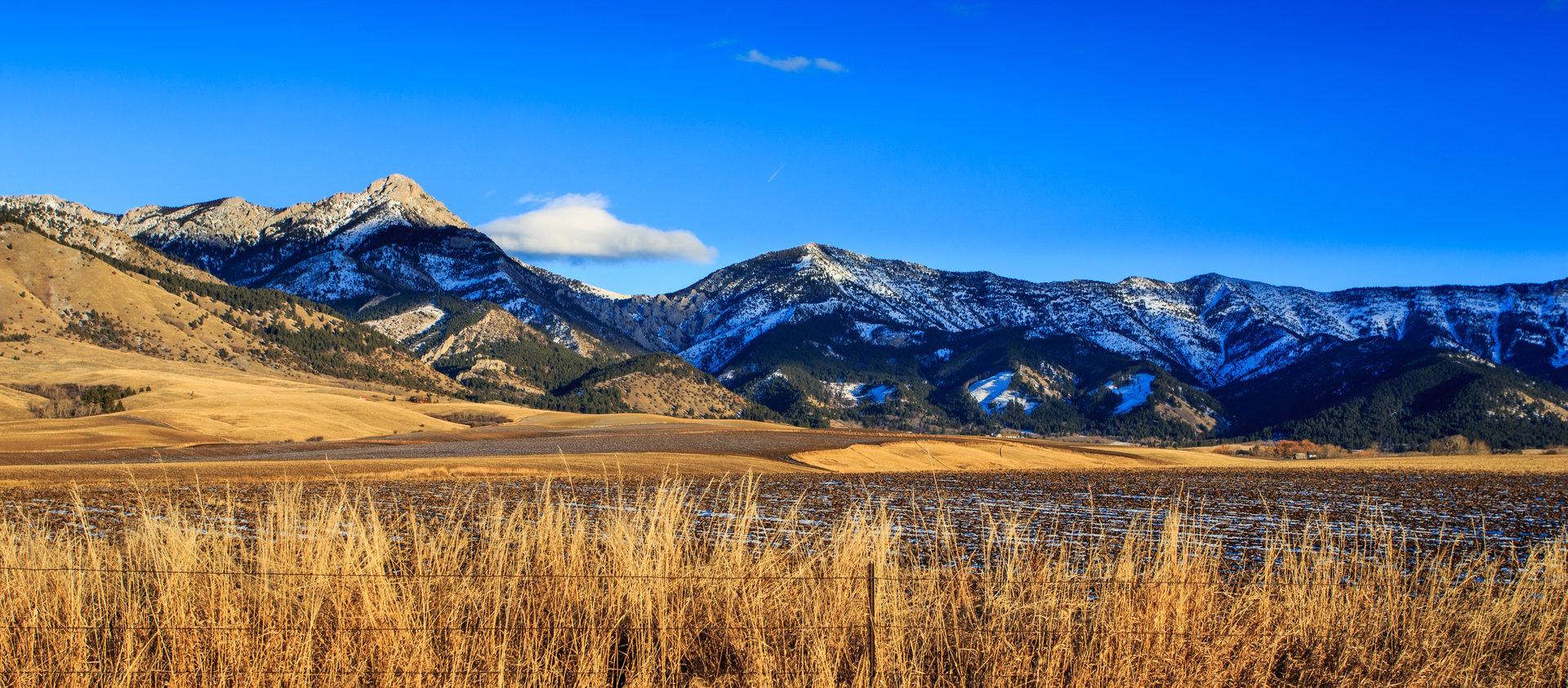 BSP - Your Netsuite 5-Star Partner In Montana